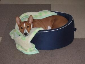 寒くなってきて毛布が恋しいこのごろ。