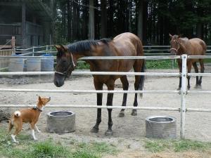 馬さんこんにちは。
